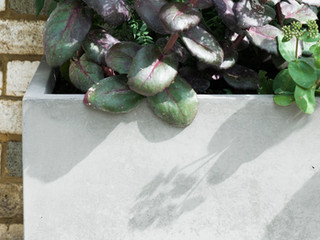 Concrete planter with sedum in a modern cambridge garden