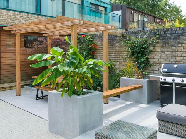 Modern courtyard garden in cambridge with banana tree and tropical foliage