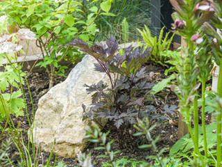 A landscaping rock with planting surrounding it