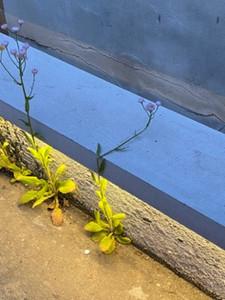 deimüdigkeitderblumen.jpg