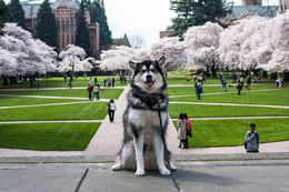University of Washington (華盛頓大學)