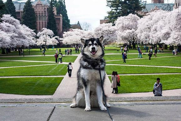 紐約大學.jpg