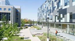 York University (約克大學)