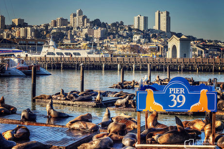 Pier-39-California-Seal-Lions-Jennifer-R