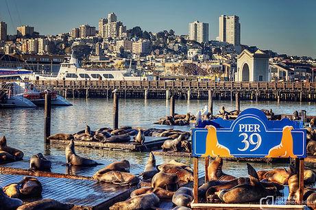 Pier-39-California-Seal-Lions-Jennifer-R