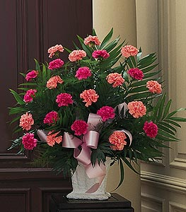 Carnation Traditional
