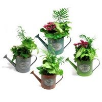 Watering Can Dish Garden