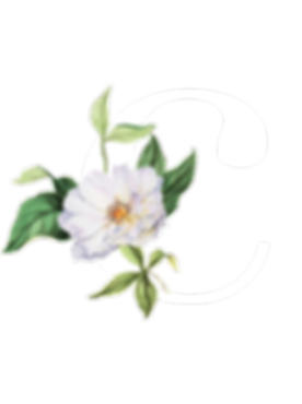 C_Logo-with-flower_White.png