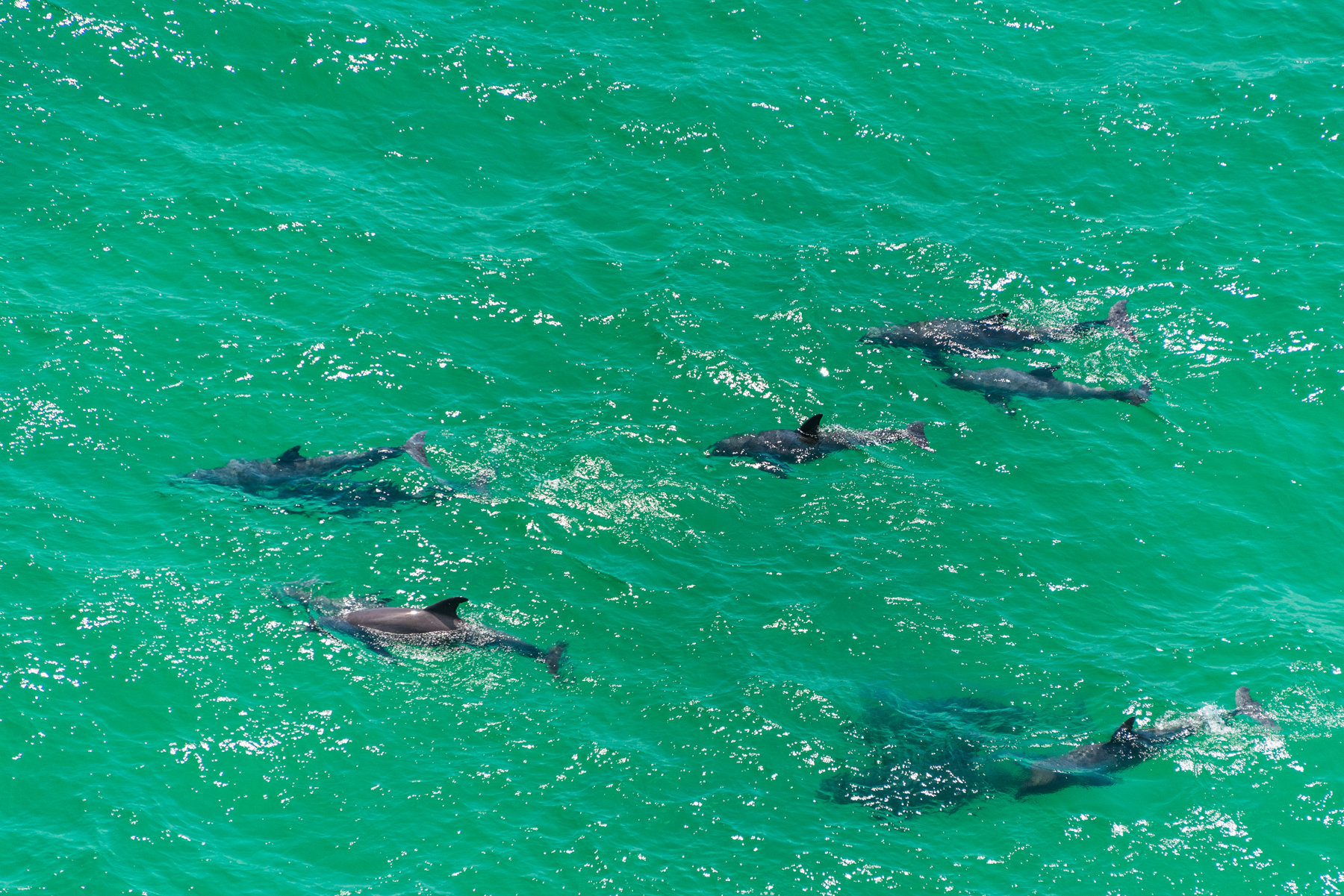 Dolphins in Panama City Beach