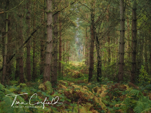 Fine Art Photography Print - Can't See The Wood For The Trees, Shropshire