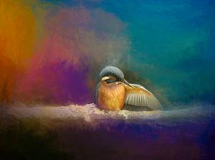WI13 Preening  Kingfisher