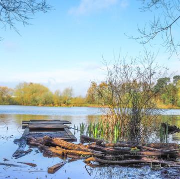 Apley Lake in Spring P4180398.JPG