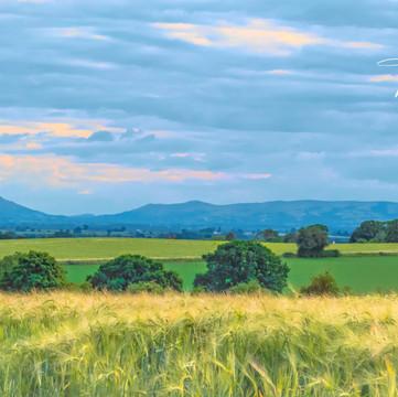 Shropshire Hills, Summer