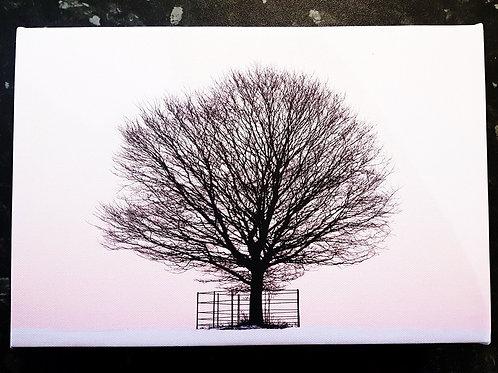 A2 Handmade Canvas - Lone Winter Tree