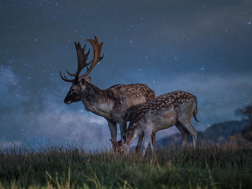 Fine Art Photography Print - Moonlit Deer, Digital Art