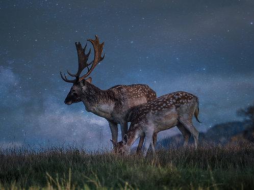 A4 Print - Moonlit Deer, Digital Art