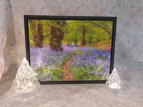 Bluebell Woodland A3 Canvas in Stunning Floating Frame