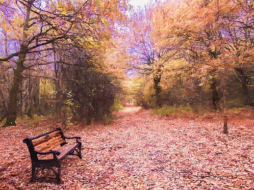 A4 Print - Stanmore Country Park, Shropshire