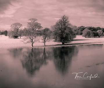 Pink Reflections, Attingham
