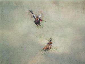WI02 Flighty Pheasants.jpg