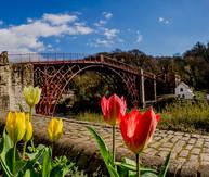 SI01 Ironbridge with Tulips