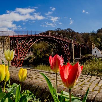 Ironbridge with Tulips _3260273.JPG