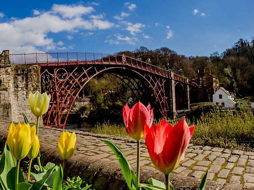 Fine Art Photography Print - Ironbridge Tulips, Shropshire