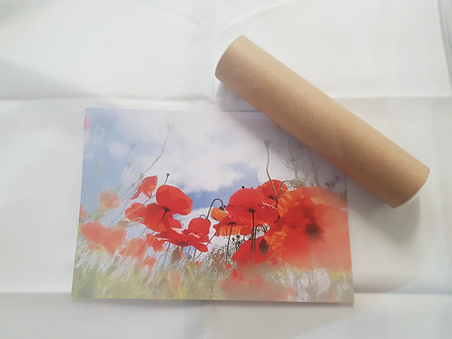 Poppies A4 Poster