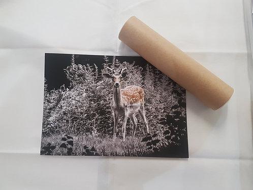 Deer A4 Poster