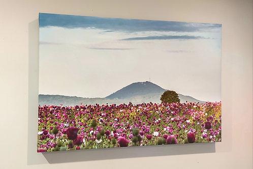 Wrekin and Poppy Fields