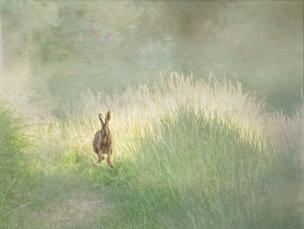WI03 Running Hare.JPG