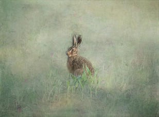 WI09 Resting Hare.JPG