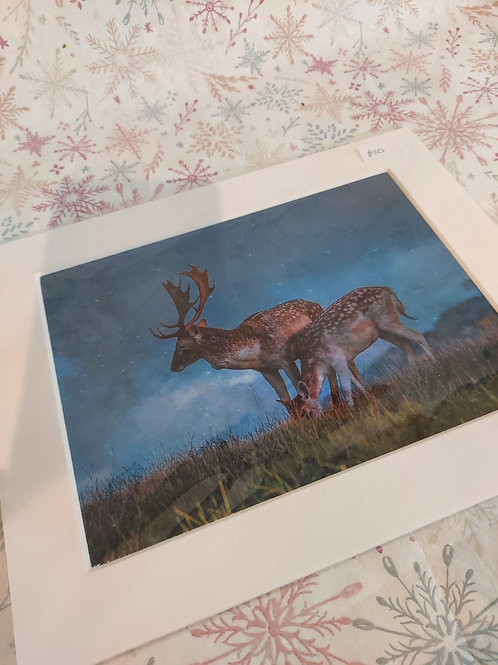 Mounted Prints - White 8 x 6 inch Choose your image