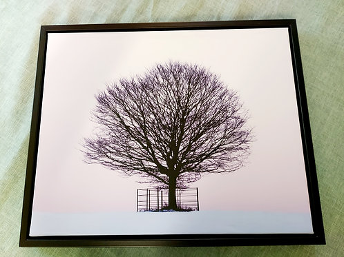 Lone Tree in Winter Canvas in Stunning Floating Frame