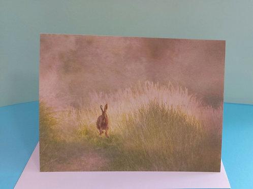 Wildlife Impressions Greetings Cards