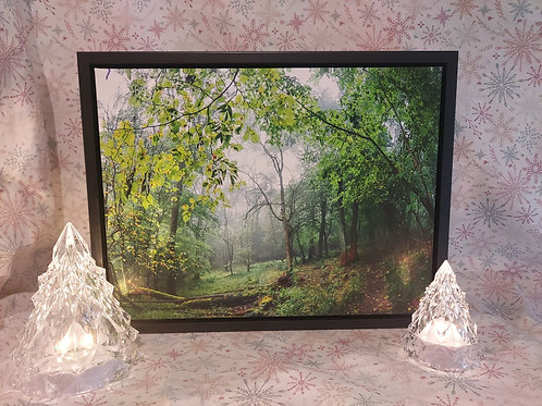 Misty Woodland A3 Canvas in Stunning Floating Frame