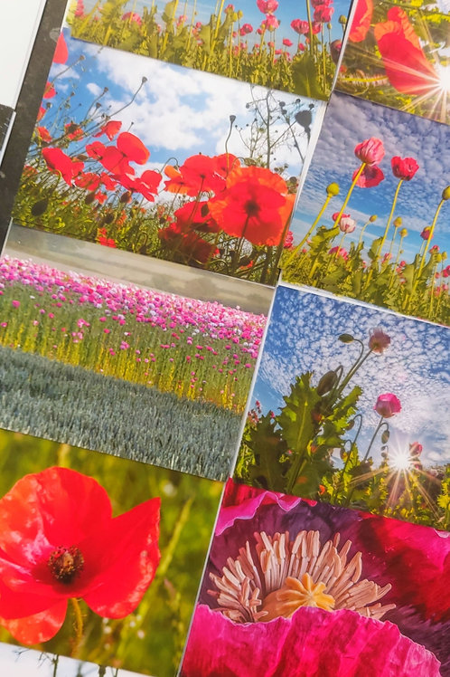 Floral Impressions Greetings Cards - The Poppy Collection