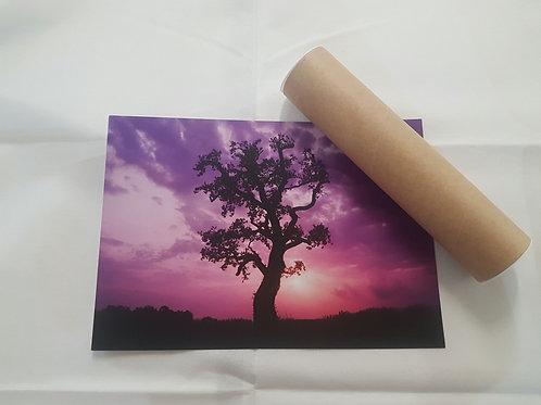 Lone Tree at Sunrise (purple) A4 Poster