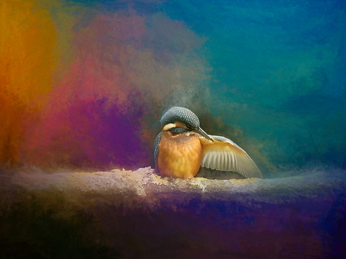 Fine Art Photography Print- Preening Kingfisher - Wildlife Impressions