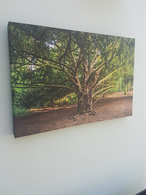 Handmade Canvas Print - The Twisted Tree