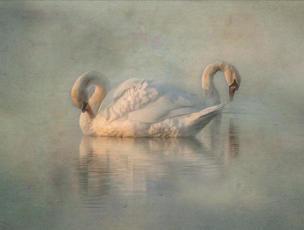 WI12 Graceful Swans.JPG