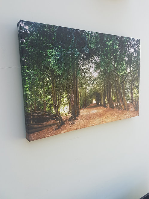 Handmade Canvas Print - Yew Tree Arch in Spring, Apley Woods, Telford, S