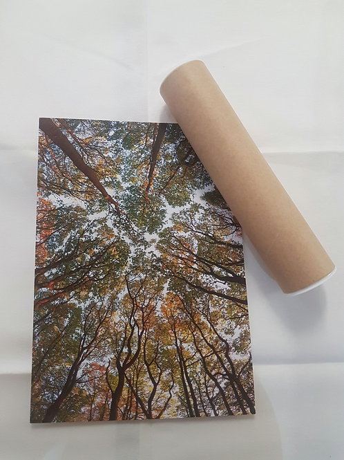 Tree Canopy A4 Poster