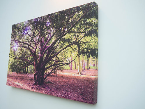 Handmade Canvas Print - The Twisted Tree, Apley Woods, Shropshire