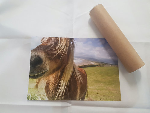 Horse A4 Poster