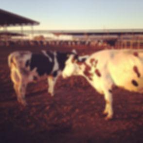 Superstition Dairy Farm