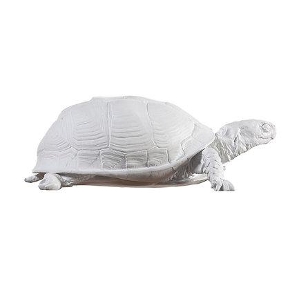 Reality Turtle Jewelry Box (White