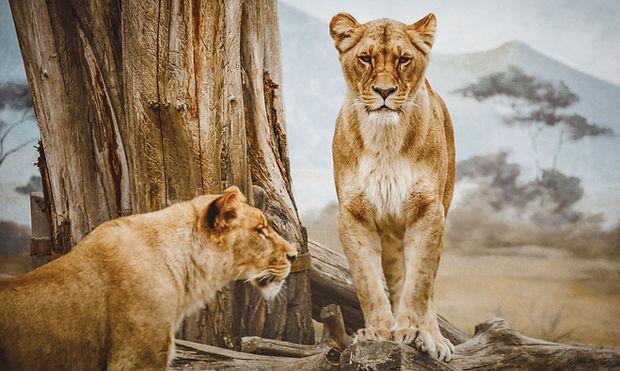 leoas