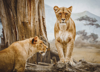 What Does the Book of Daniel Have to do with Teens?