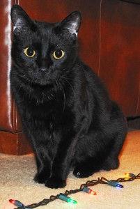 Zena the cat